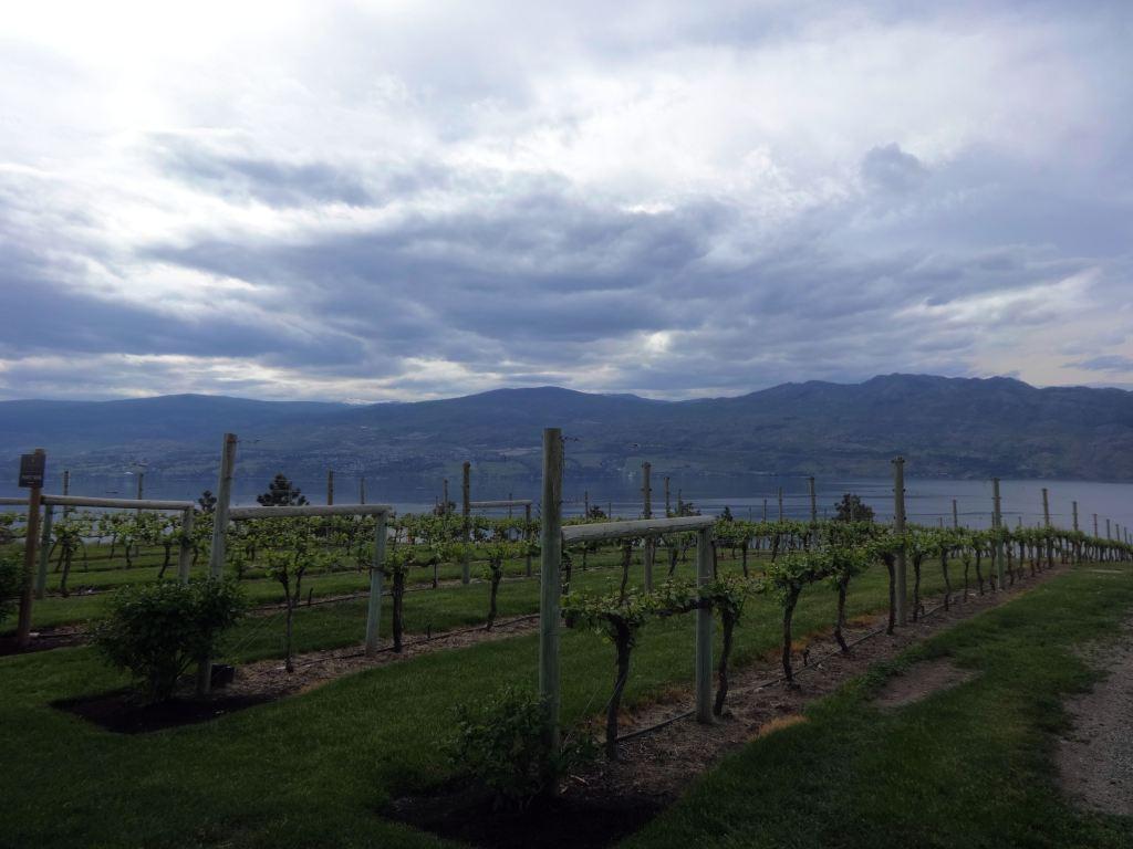 Kelowna Wineries