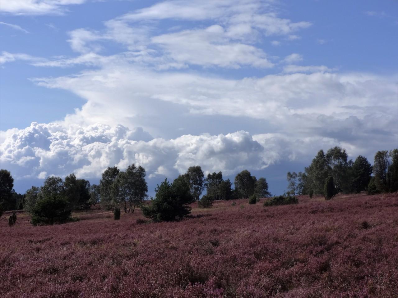 Lunenberger Heide
