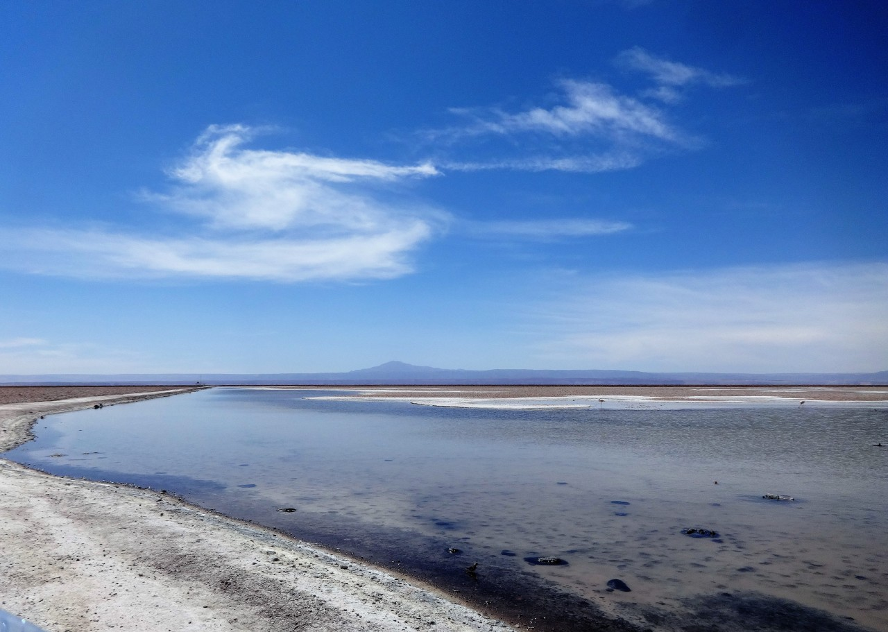 Lagoons and Flamingos, Atacama Desert