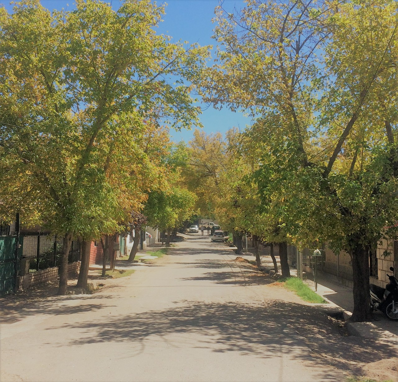 A Bike and Wine Tour, Mendoza
